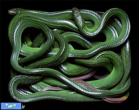 عکس مار,Beautiful Snake Photography