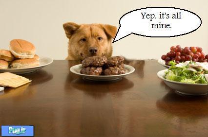 عکس سگ در حال غذا خوردن