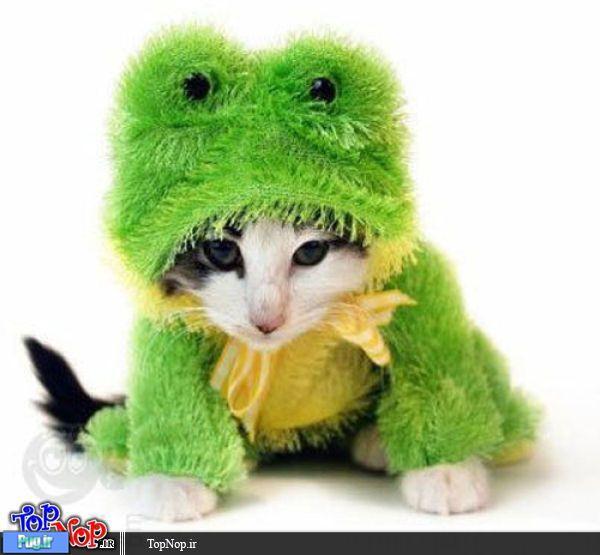 پرشین پت > > لباس برای گربه ها