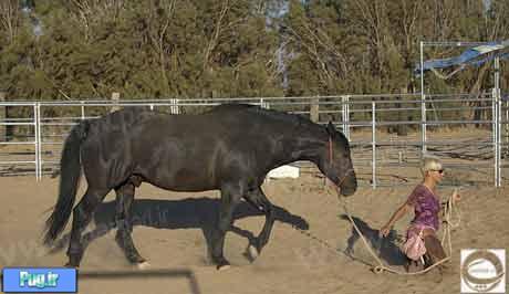 جفت گیری زن نزديكي اسب با زن - دانلود نرم افزار | دانلود جدید | دانلود ...