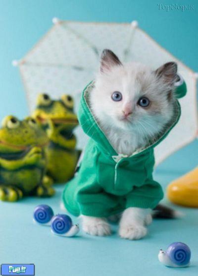 پرشین پت > > گربه های با لباس