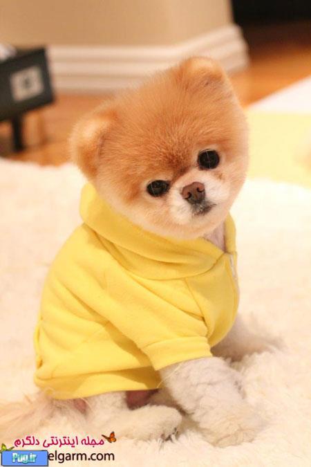 قیمت سگ بو