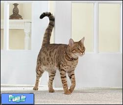 دم گربه و حس و حال گربه