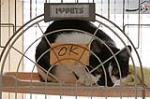 حیوانات رها شده در فوکوشیما