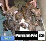 هم**برای کمک به میلیون ها سگ امضا کنید