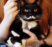 گربه ای با سییلی عجیب