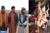 فروشندگان گوشت سگ بازداشت شدند/