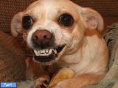 بیسکوییت سگ رژِیمی-بوش المان 450 گرمی