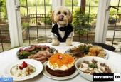 _گدایی کردن غذا در سگ ها