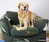 جویدن مخرب در سگ ها