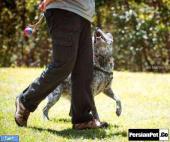 چگونه از حفاری سگ جلوگیری به عمل آوریم؟