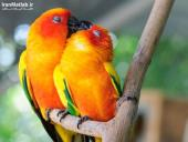 بوسه های عاشقانه در دنیای حیوانات