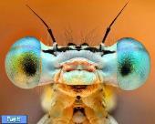 عکس های پرتره از حشرات