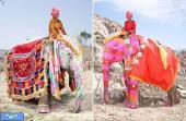 فیلهای بزَک شده هندو ها +عکس