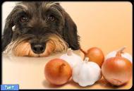 غذای ممنوعه برای سگ ها