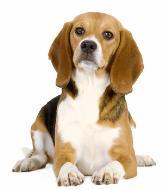 چرا صدای سگم گرفته است