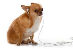 دیستمپر در سگ ها