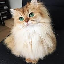 بیماری های گربه