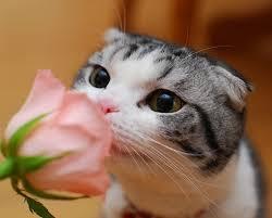 چرا من به گربه حساسیت دارم