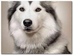 قلاده برای سگ ها