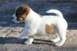 اگر ناخن سگ خون امد چه کنم
