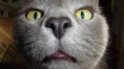 شناخت گربه