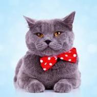 گربه رو تا حالا اینجوری نشناختی