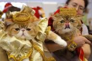 گربه ها را بیشتر بشناسیم