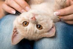 گربه خوشبوی من