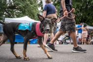 عکس های یی از جشنواره بزرگ حمایت از حیوانات بی سرپرست در سال 2017 نیویورک