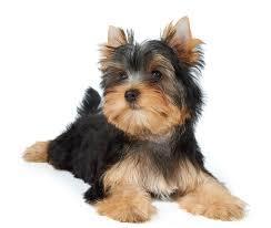 چرا باید سگ بخرم