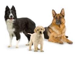 همه چیز درباره استفرغ در سگ ها
