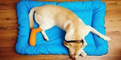 صدمات استخوانی در حیوانات خانگی