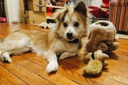 وسایل لازم برای نگهداری از سگ ها