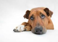 ده علامت شایع بیمار شدن سگ ها