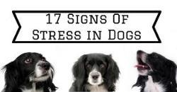 استرس در سگ ها را کمتر کنید