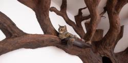 درخت گربه در منزل