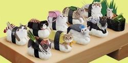 سوشی های گربه