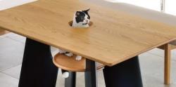صبحانه با گربه