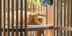 خانه ای مدرن برای گربه ها