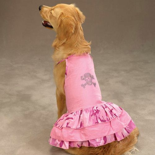 Dog Fashion
